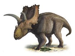 Coahuilaceratops-magnacuerna-sergey-krasovskiy
