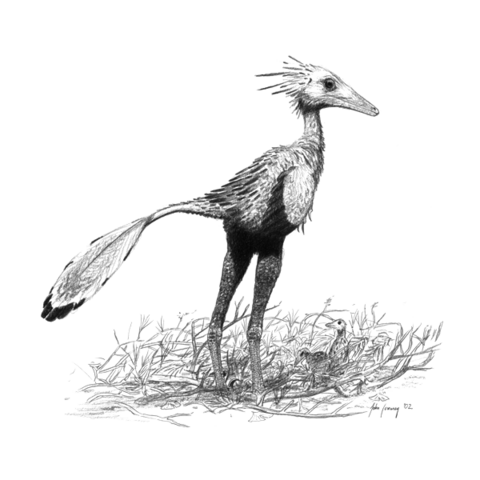 File:Sinornithoides-youngi jconway.png