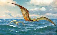 Pteranodon hharder