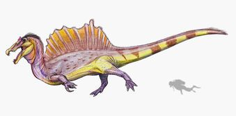 Spinosaurus - a new reconstruction