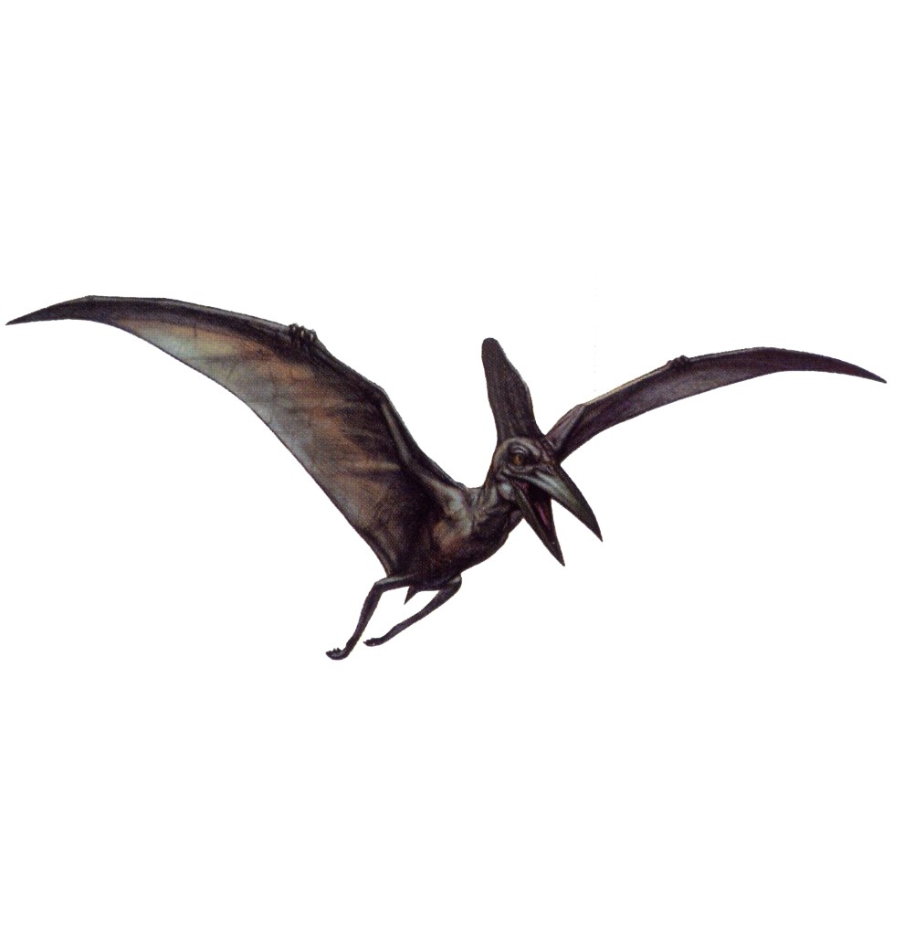 pteranodon dino crisis wiki fandom powered by wikia