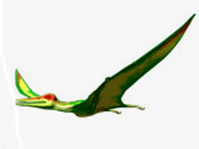 Pterodactylus (1)