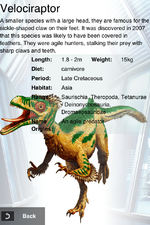 Album Rare Normal Velociraptor