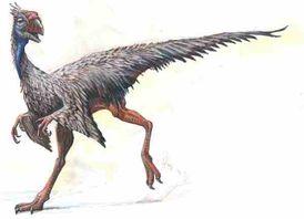 File:Caudipteryx.jpg