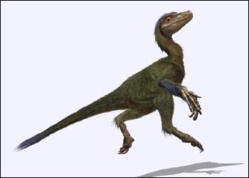File:Dromaeosaurid.jpg