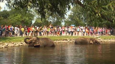 """GO WILD!!"" at African Lion Safari!"