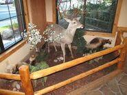 Deer and woviene