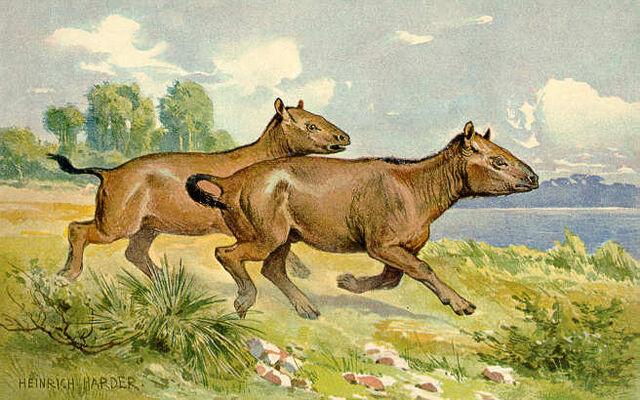 File:Paleotheriumhorse.jpg