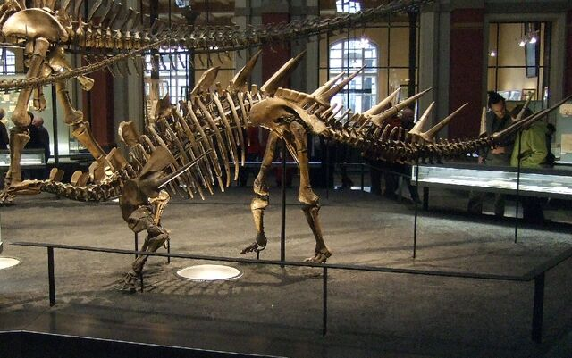 File:Kentrosaurus.jpg