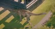 Cetiosaurus 4