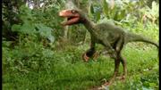 Deinonychus 1
