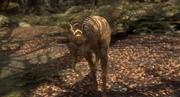 Jeholosaurus 1