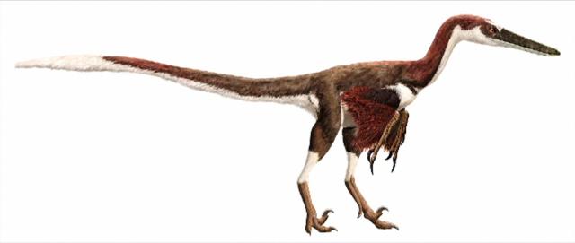 File:Austroraptor.png