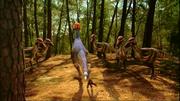 Adult Pachycephalosaur