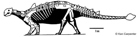 File:Euoplocephalus skeleton.jpg
