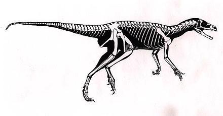 Image result for Eoraptor