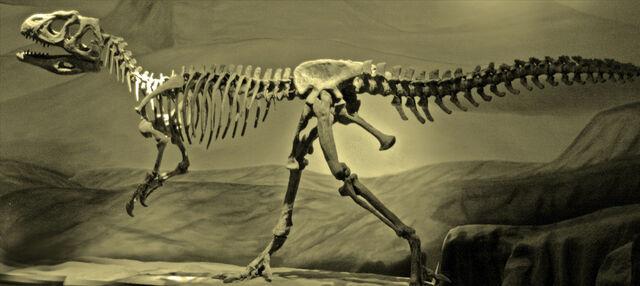 File:Piatnitzkysaurus skeleton.jpg