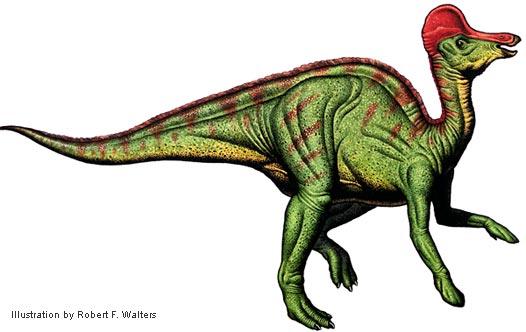 File:Corythosaurus walters.jpg