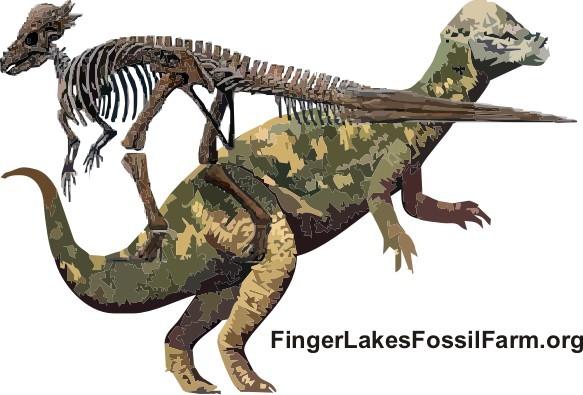 File:Pachycephalosaurus skeleton.jpg