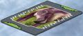 Maiasaura card A