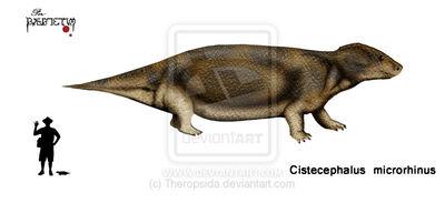 Cistecephalus microrhinus by Theropsida