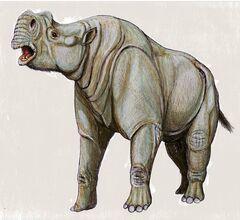 Protitanotherium.jpg