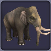 DwarfSicilianElephant F
