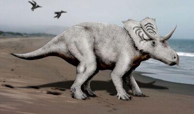 Mojoceratops NT