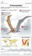 Pteranodon-121210