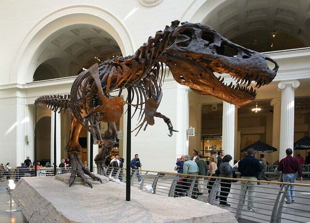 File:TyrannosaurusSue1.jpg