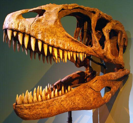 File:Carcharodontosaurus (1).jpg
