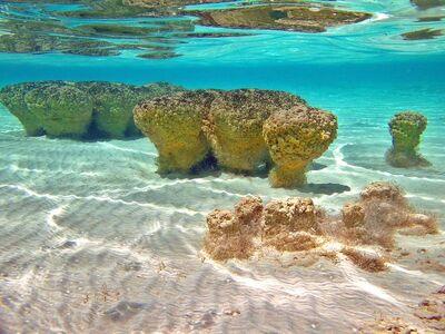 Stromatolites underwater md