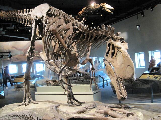 File:Daspletosaurus - front.JPG