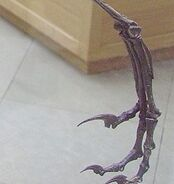 Bambiraptor leg