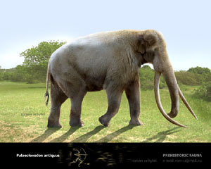 Palaeoloxodon antiquus