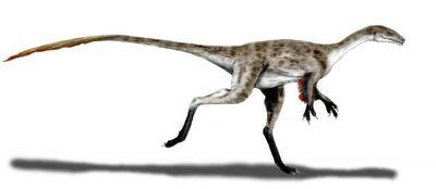 Coelurus 5735
