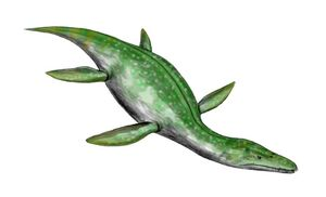 Rhomaleosaurus BW