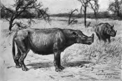 DiceratheriumRBH