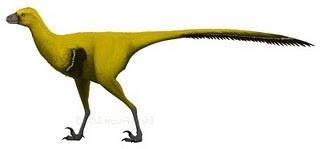 File:Tianyuraptor ostromi-0.jpg
