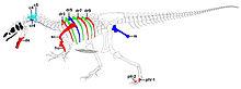 Allosaurus -Big Al II-