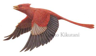 Protopteyx