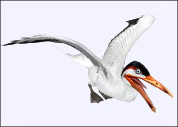 File:Europe ichthyornis hzoom.jpg