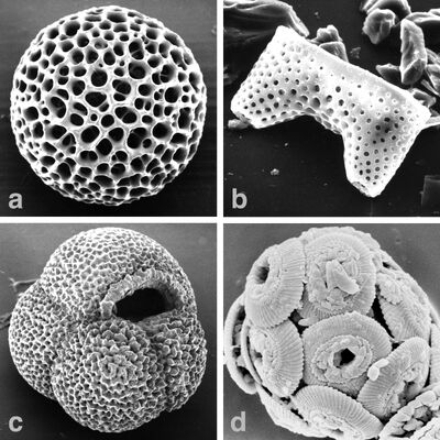 Microfossils-major hg