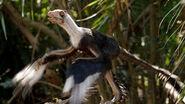 Microraptor (Prehistoric Park)
