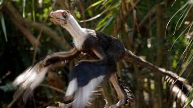 File:Microraptor (Prehistoric Park).jpg