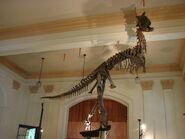 Carnotaurus sastrei Museo Nacional de Historia Natural Santiago Chile