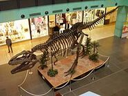 Kostra giganotosaura