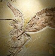 Ancient-fish-pterosaur