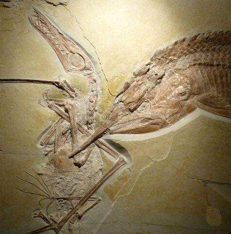 File:Ancient-fish-pterosaur.jpg
