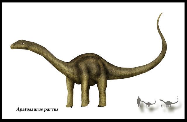 File:Apatosaurus parvus by karkemish00.jpg